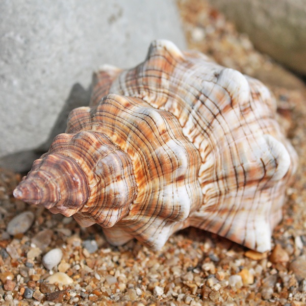 shells pictures to pin on pinterest   pinsdaddy